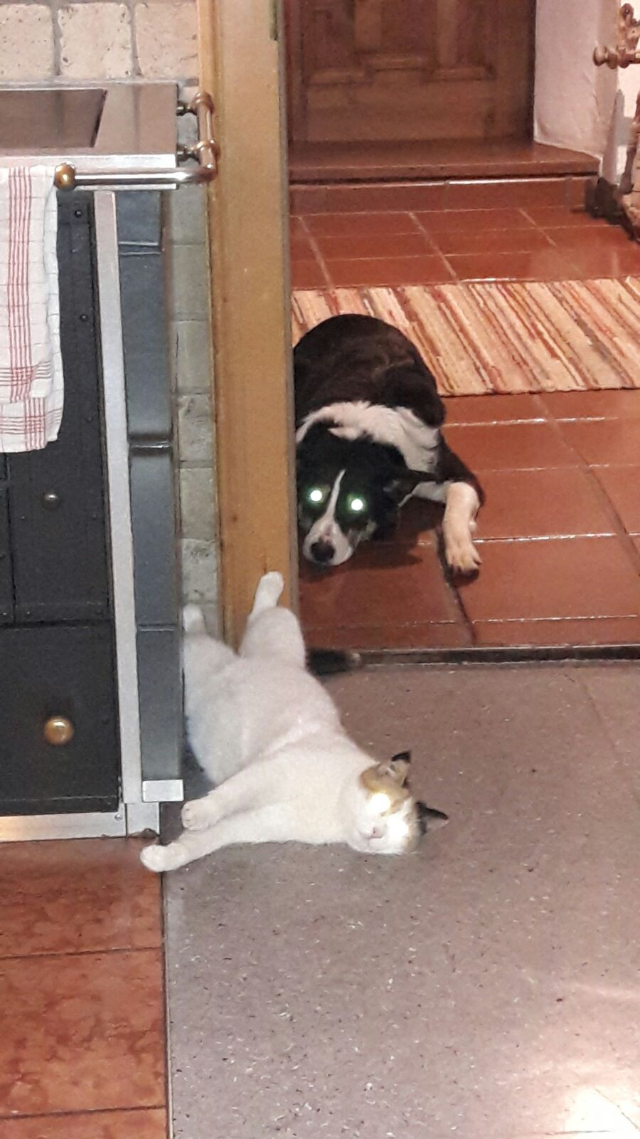 Murli und Senta genießen die gemeinsame Zeit